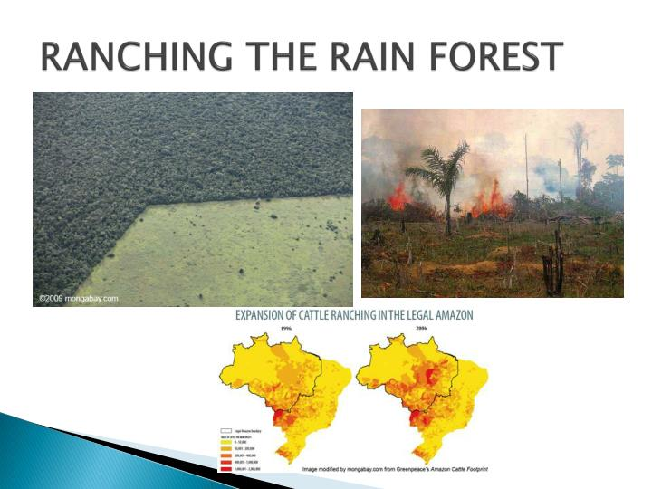 RANCHING THE RAIN FOREST