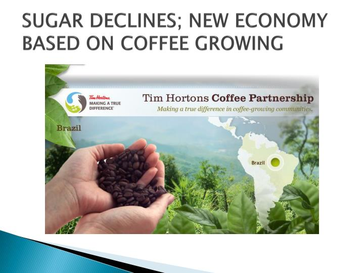 SUGAR DECLINES; NEW ECONOMY BASED ON COFFEE GROWING