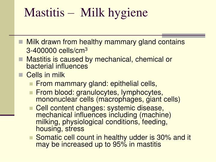 Mastitis –  Milk hygiene