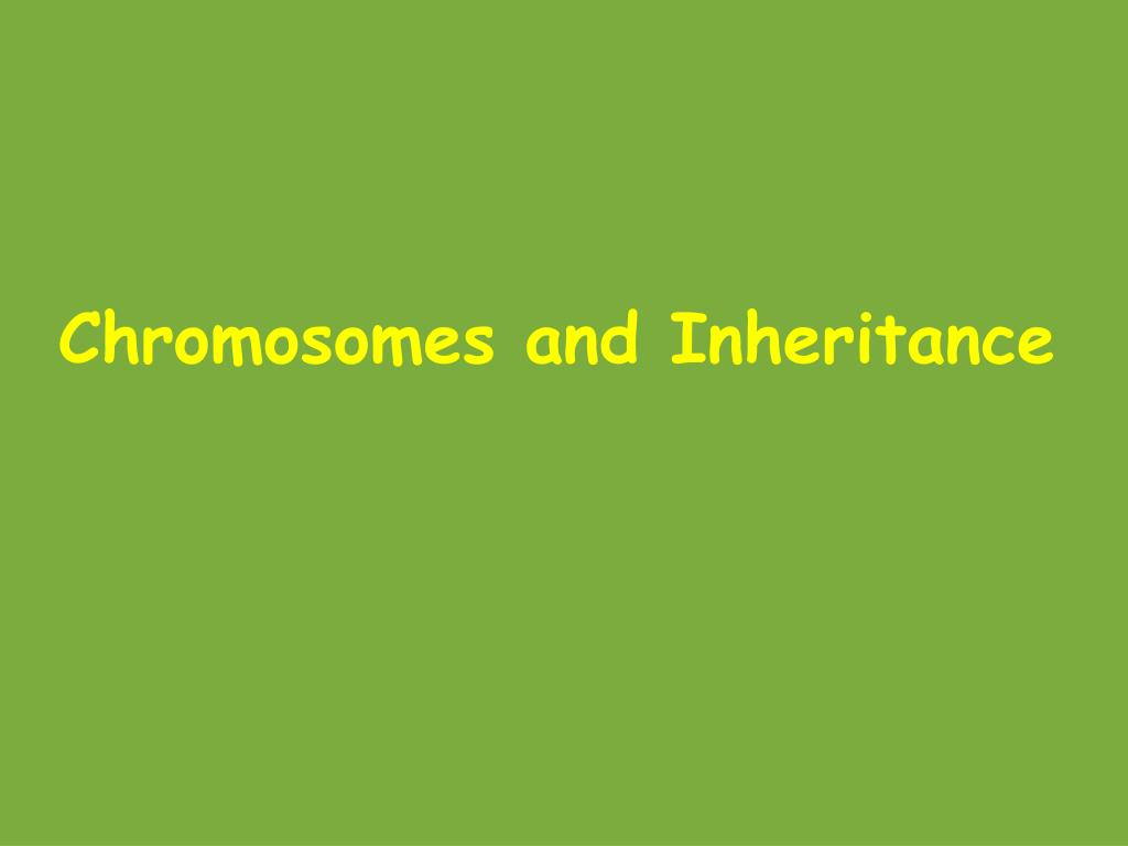 sex chromosomes and sex determination ppt slides in by Victor Harbor