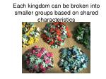 each kingdom can be broken into smaller groups based on shared characteristics