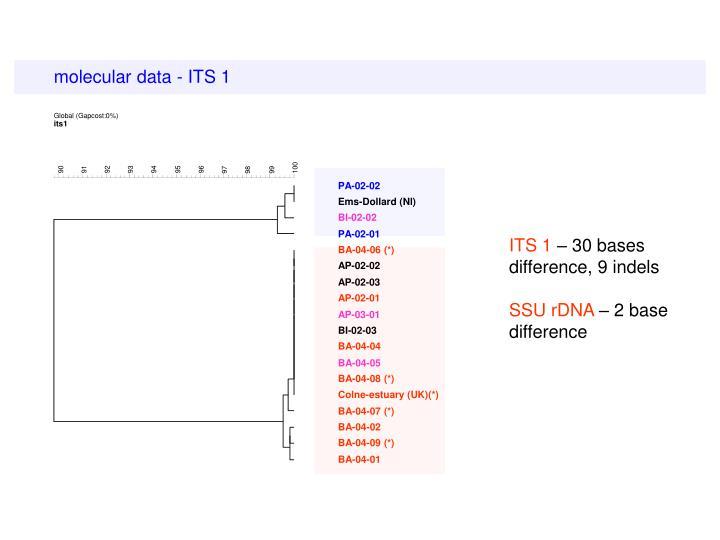 molecular data - ITS 1