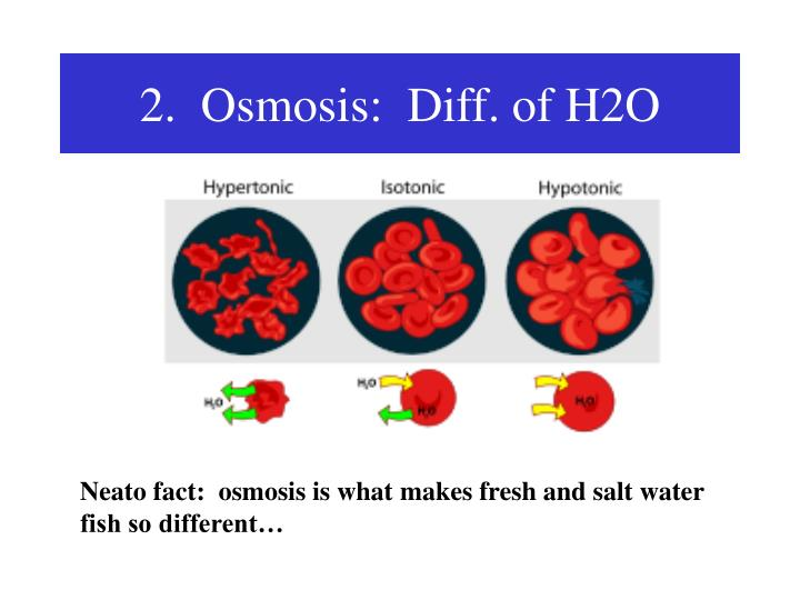 2.  Osmosis:  Diff. of H2O