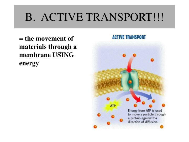 B.  ACTIVE TRANSPORT!!!