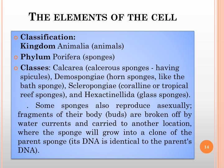 The elements of the cell