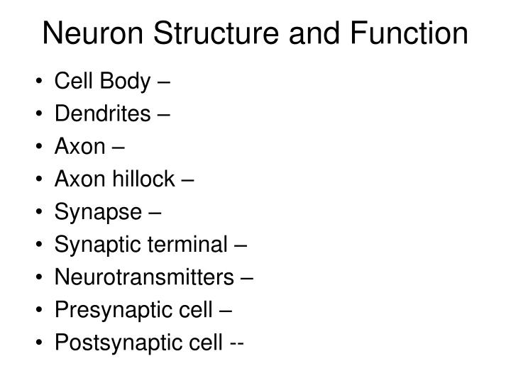 Ppt chapter 48 neurons synapses and signaling powerpoint neuron structure and function ccuart Gallery