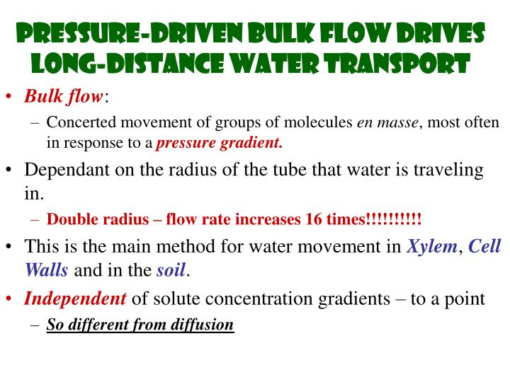 Pressure-driven bulk flow drives long-distance water transport