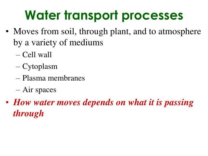 Water transport processes