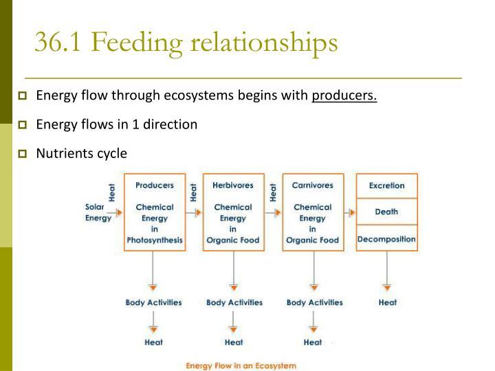 36.1 Feeding relationships