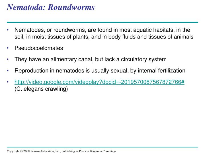 Nematoda: Roundworms