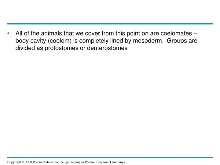 All of the animals that we cover from this point on are coelomates – body cavity (coelom) is completely lined by mesoderm.  Groups are divided as protostomes or deuterostomes