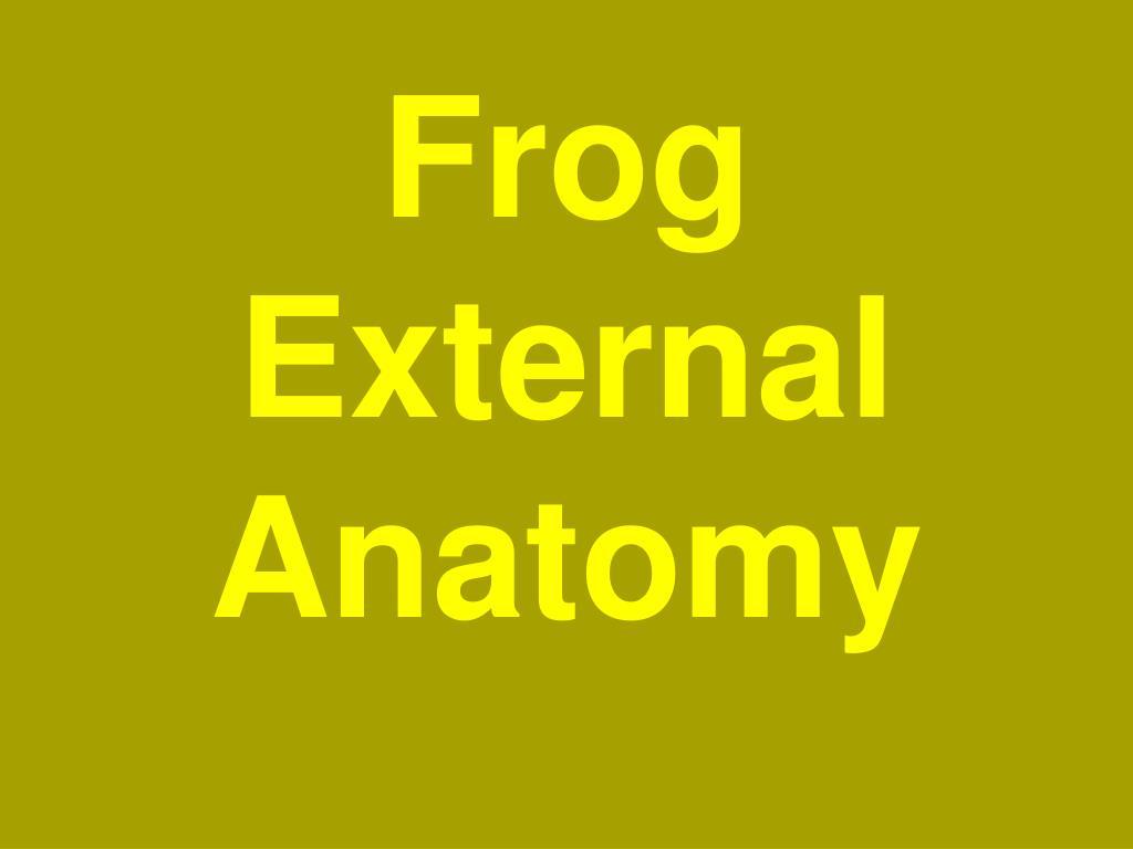 PPT - Frog External Anatomy PowerPoint Presentation - ID:6015170