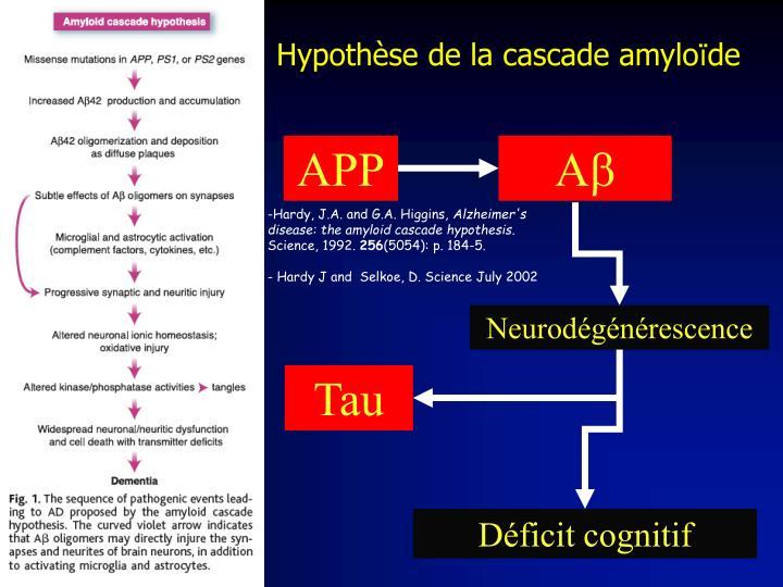 Hypothèse de la cascade amylo