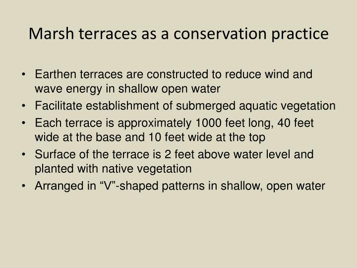 Marsh terraces as a conservation practice