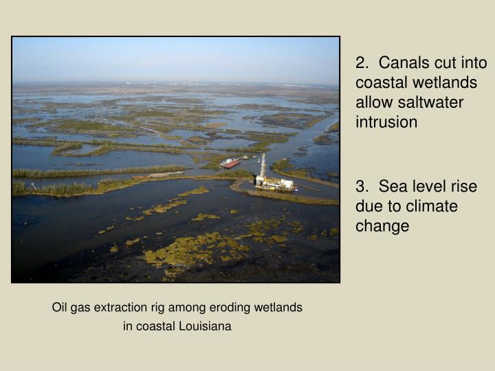 2.  Canals cut into coastal wetlands allow saltwater intrusion