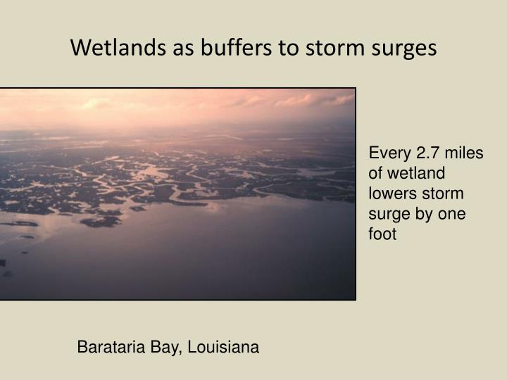 Wetlands as buffers to storm surges