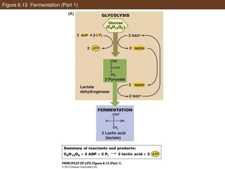 Figure 6.13  Fermentation (Part 1)