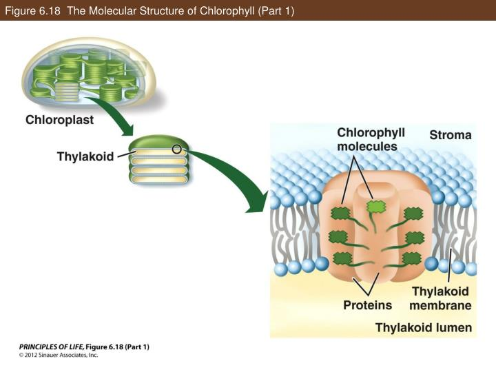 Figure 6.18  The Molecular Structure of Chlorophyll (Part 1)