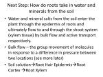 next step how do roots take in water and minerals from the soil
