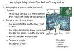 xerophyte adaptations that reduce transpiration