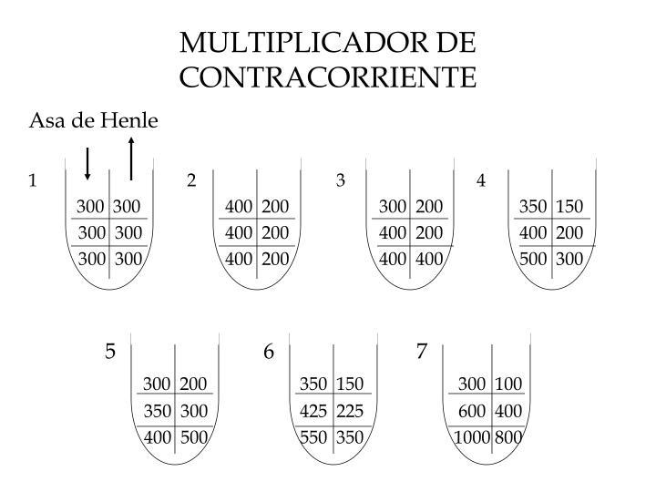 Multiplicador de contracorriente