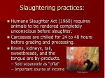 slaughtering practices