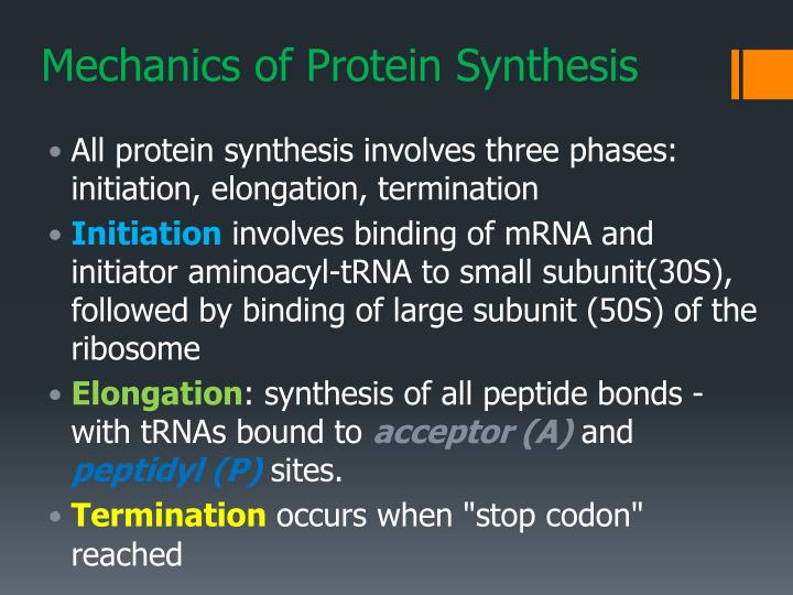 Mechanics of Protein Synthesis