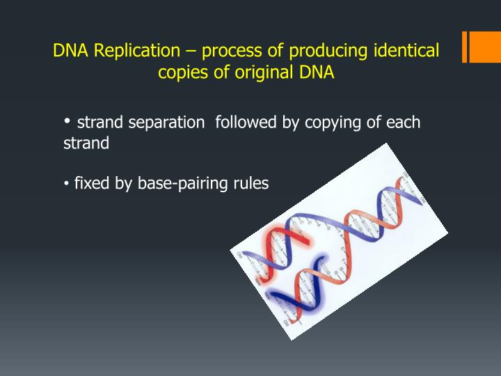 DNA Replication – process of producing identical copies of original DNA