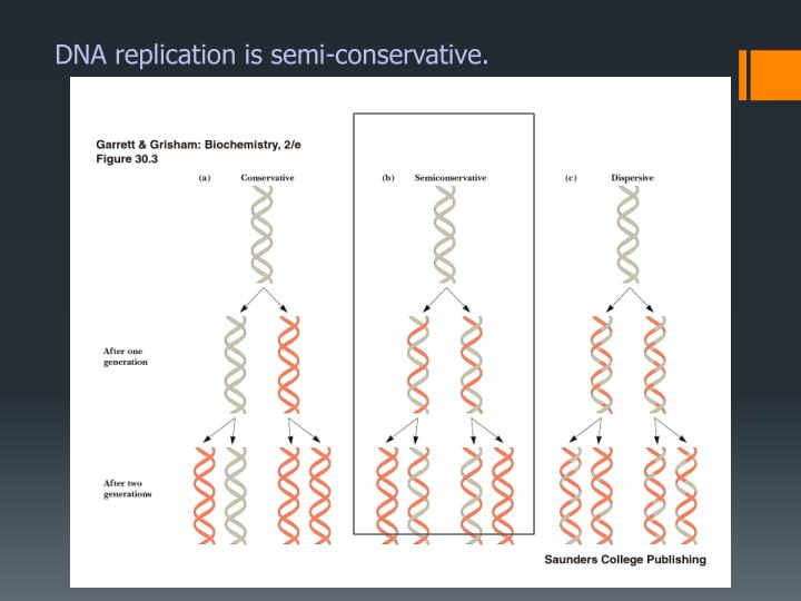DNA replication is semi-conservative.