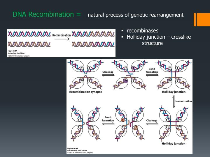 DNA Recombination =