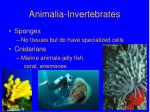 animalia invertebrates
