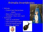 animalia invertebrates2