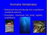 animalia vertebrates
