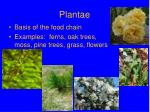 plantae1
