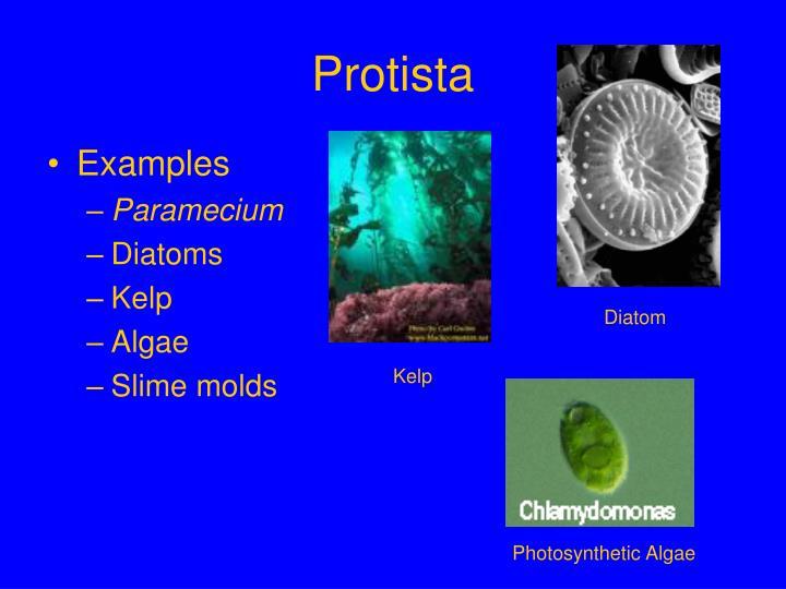 ppt - bacteria eukarya archae powerpoint presentation