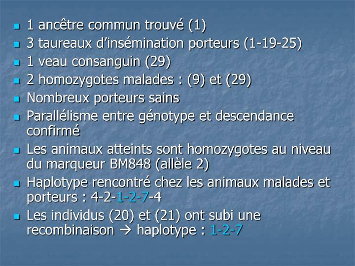 1 ancêtre commun trouvé (1)