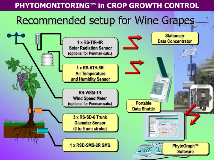 Recommended setup for wine grapes