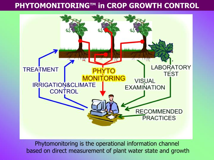 Phytomonitoring is the operational information channel
