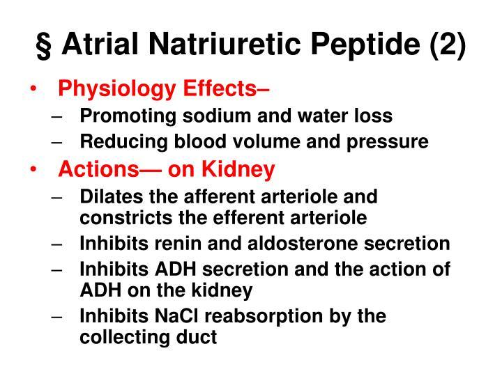 § Atrial Natriuretic Peptide (2)