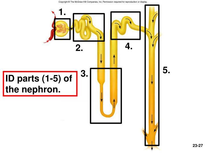 Figure 23.8b