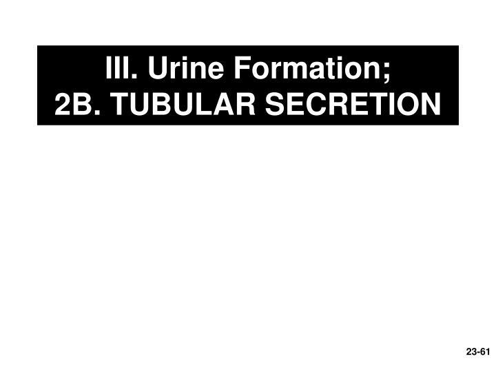 III. Urine Formation;