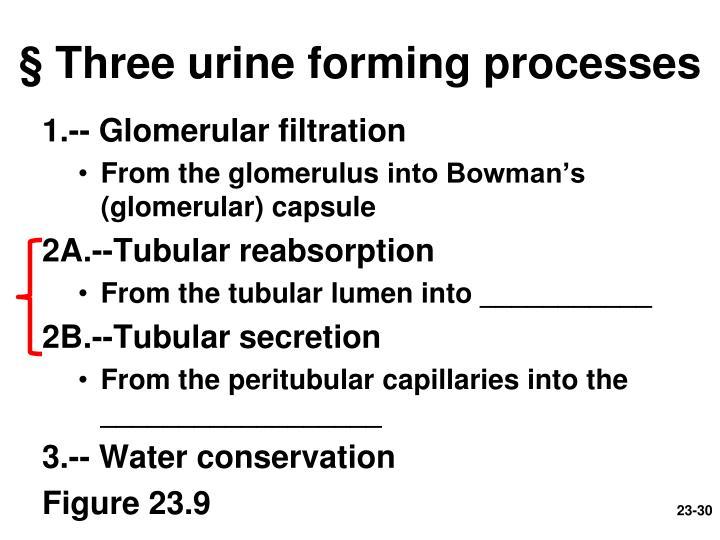 § Three urine forming processes
