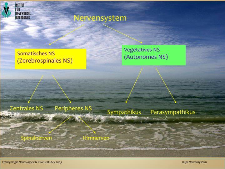 PPT - Übersicht Neurologie PowerPoint Presentation - ID:6025941