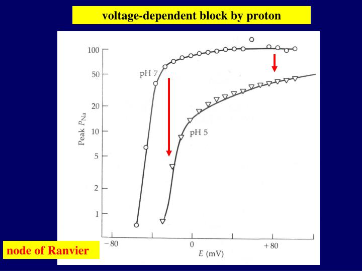 voltage-dependent block by proton