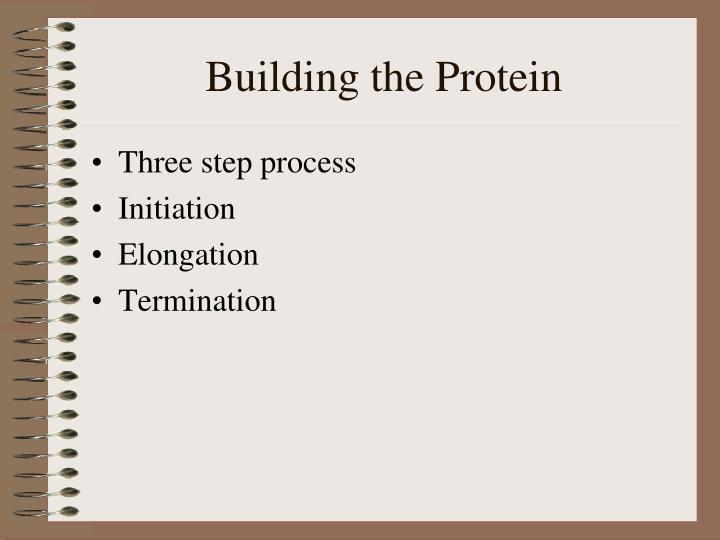 Building the Protein