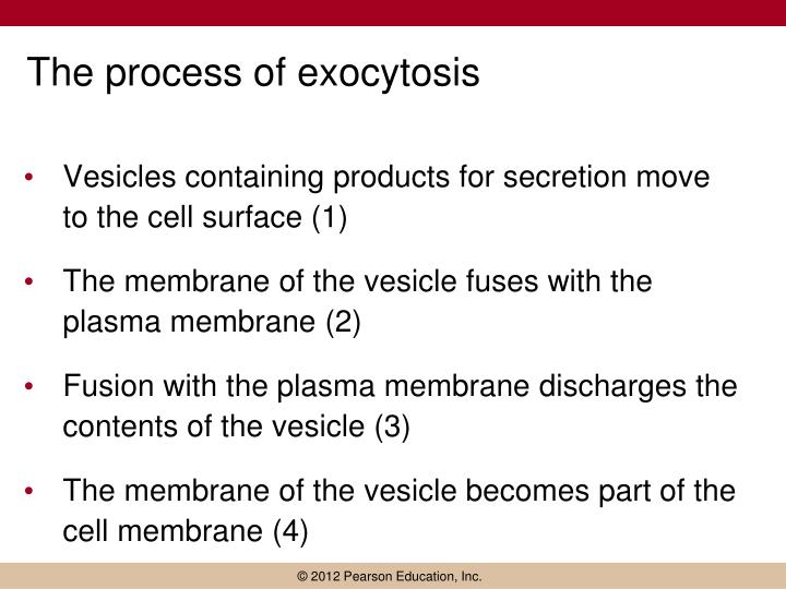 The process of exocytosis