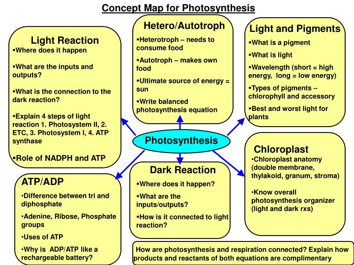 PPT Concept Map For Photosynthesis PowerPoint Presentation