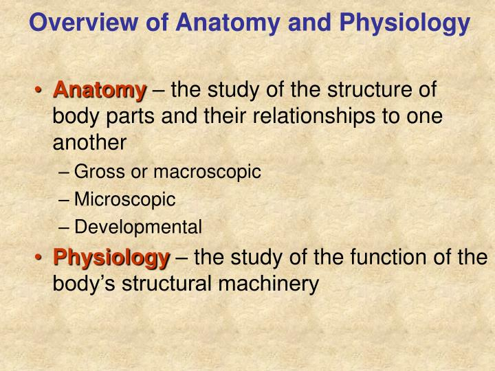 PPT - The Human Body: Anatomical Regions, Directions, and Body ...