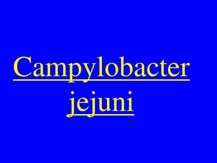 Campylobacter