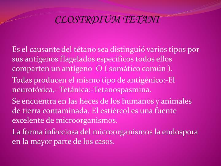 Clostrdium tetani